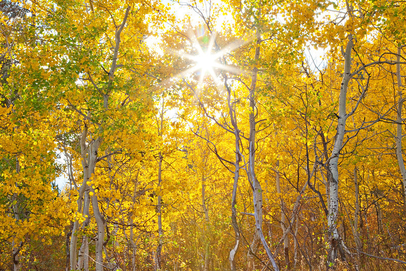 Sunstar in the aspens