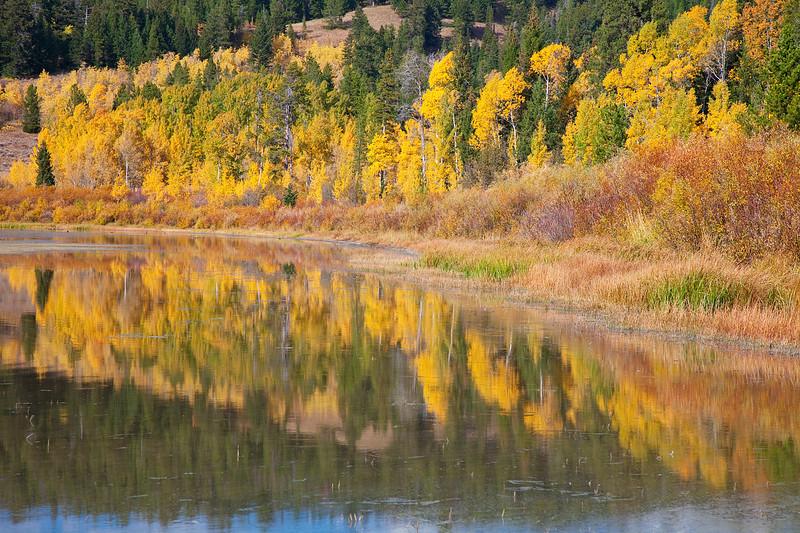 Fall color reflection at Grand Teton National Park