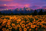 ~Tetons Magic~<br /> <br /> Grand Tetons Wildflowers with Super moon and pastel sunrise!