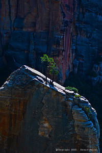 """Column of Light"", North Kaibab Trail, Grand Canyon, Az., July '07"