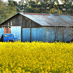 """""""Last Images of the Grant Road Farm""""  Mountain View, California."""