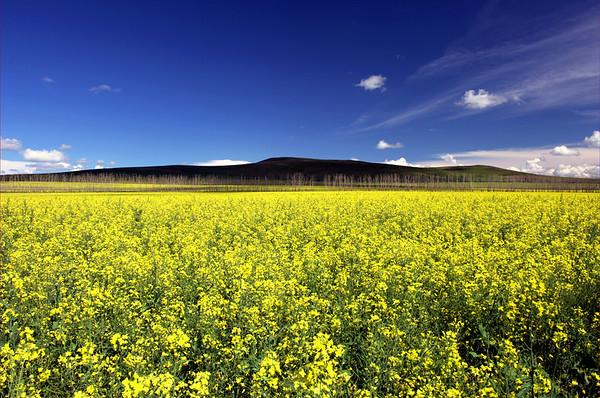 Grassland of HulunBeiEr, China-Russia border 呼伦贝尔大草原