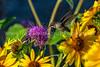 Hummingbird In The Flowers