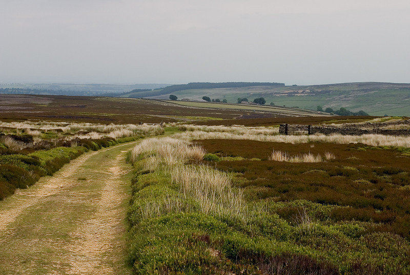 Grasses on the Yorkshire Moors, England