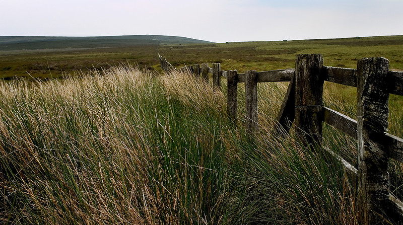 Blowing grass against a fence, Yorkshire Moors, England