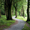 Woodland path through stately trees