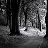 Woodland walk in black and white