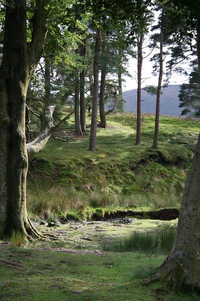 Forest of Bowland, Lancashire, England