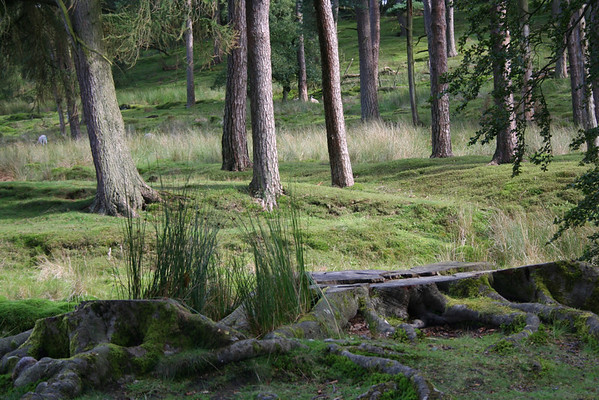 Stumps--Forest of Bowland, Lancashire, England