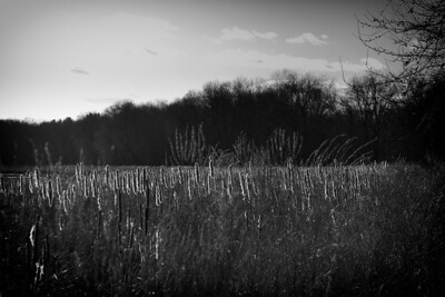 12 February 2012.  Great Meadows NWR. Photo taken with Nikon D90 and Nikkor 85 mm lens.  Photo processed with Adobe Photoshop CS5 and Nik Silver Efex Pro 2.
