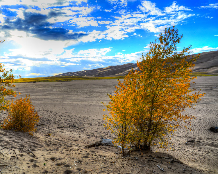 Great Sand Dunes National Park (12 of 18)
