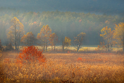Misty Tennessee Morning in Cades Cove