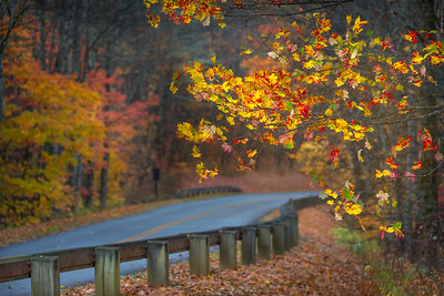 Sugar Maple_ Blue Ridge Parkway