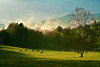 Tennessee, Great Smoky Mountains, Cades Cove, Sunrise, Spring Fog, Landscape, 美国,田纳西, 大烟雾山国家公园 风景
