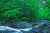 Tennessee, Great Smoky Mountains, Little River, Stream, Spring, Rocks, Landscape,美国 大烟雾山国家公园,田纳西, 风景