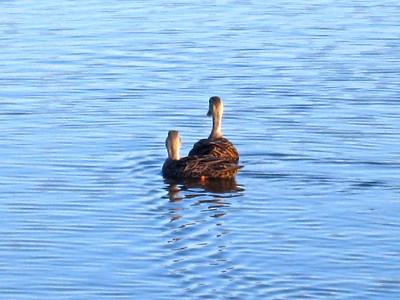 Green Cay Wetlands Visit Feb. 13, 2010