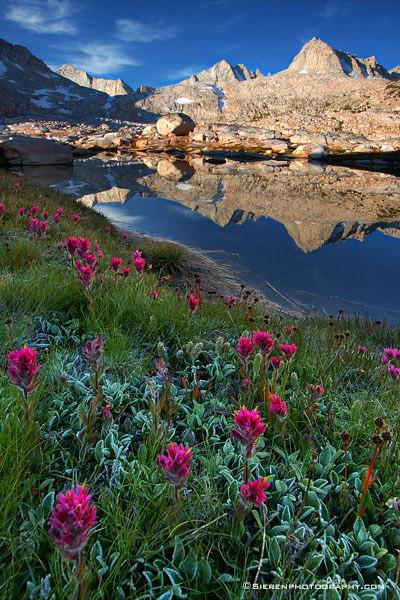 Summer Spring<br /> John Muir Wilderness - Eastern Sierra Nevada Mountain Range, California