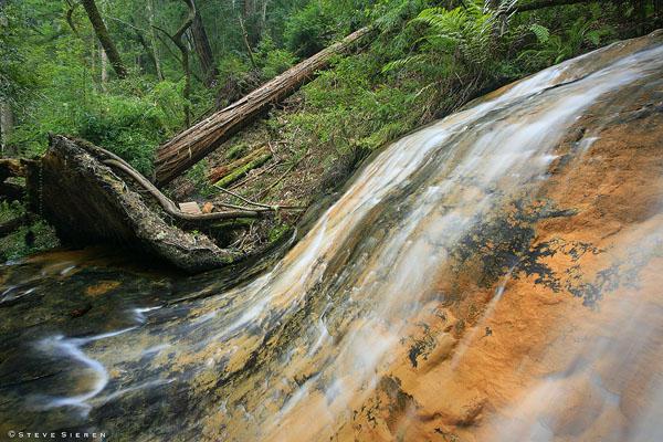 Gold Cascade - Redwood Country Central California Coast