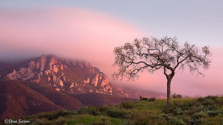 """Inland Crawl  A lone oak bearing signs of life with a small set of spring leaves while coastal fog hits a speed bump and slowly crawls inland.  Santa Monica Mountains, California  <p>Explore new areas with Steve Sieren and learn to see in a different way <br><a href=""""http://www.ScenicPhotoWorkshops.com"""" target=""""_blank"""">ScenicPhotoWorkshops.com</a><br> Sign up today."""