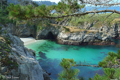 The Cove  Point Lobos, California / Carmel, CA