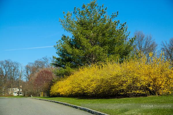 Greenwich Township NJ - Spring