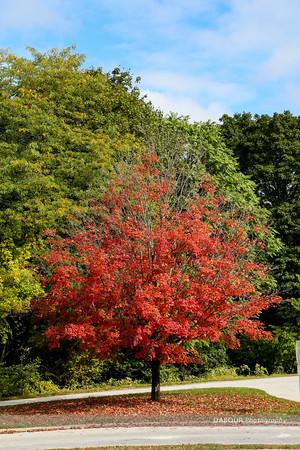 Fall 2014 Greenwich Twp NJ