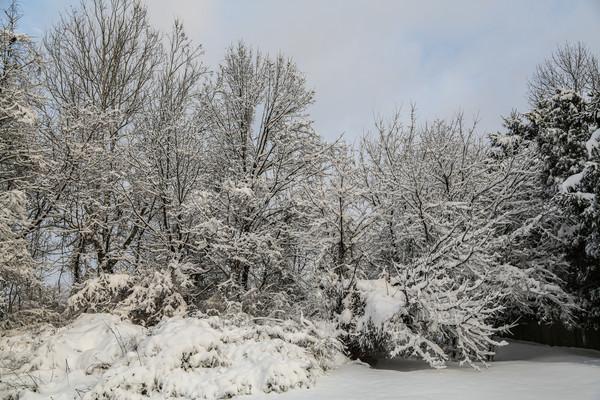 Greenwich Twp Winter w Snow