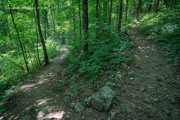 Greer Spring Trail