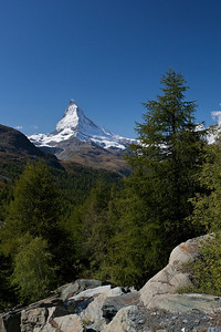 Matterhorn and Larch Trees