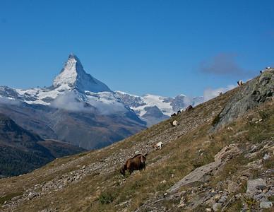 Matterhorn and Goats