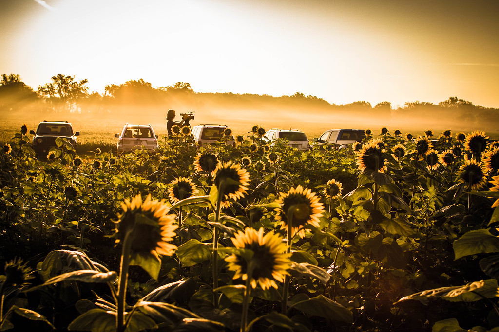 Grinter Farms Sunflower Field (2015)