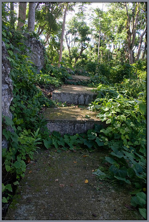 Every step of the way is lush with the textures of stone and tropical foliage along the winding stairway at Sugar King Park.
