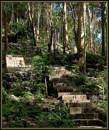 A stone stairway winds along the hill behind the Shinto Shrine at Sugar King Park. The coolness of the shade and lush foliage provide a natural setting for restful solitude. These steps lead to a wooden pagoda.