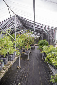 GPEPP nursery at the University of Guam, Guam