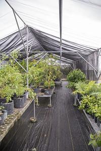 GPEPP nursery at the University of Guam, Guam