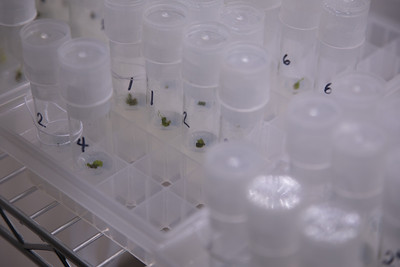 GPEPP tissue culture lab at the University of Guam, Guam