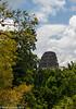 Tikal Jungle View 03-2015