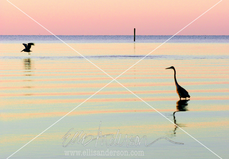 3  pelican and heron 7098