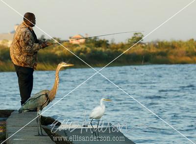 fishermen and herons 2157 FN