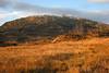 Byrkjefjell på Kvamskogen