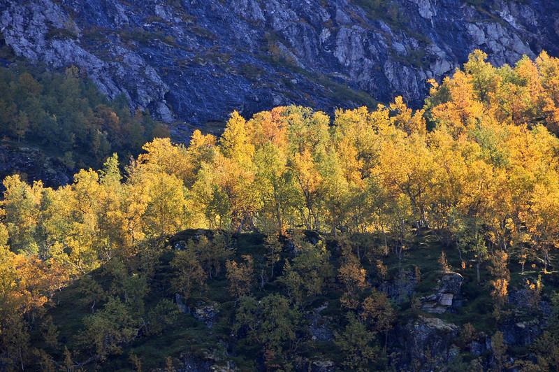 Fra Mjølfjell
