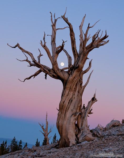 Moon Catcher