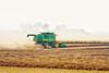 Canola Harvest