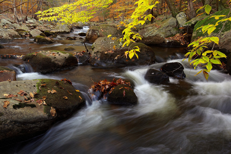 Stoney Brook