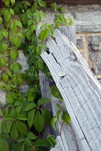 I liked the look of this weathered handrail and the green vine.  Taken near the old fountain at the castle.