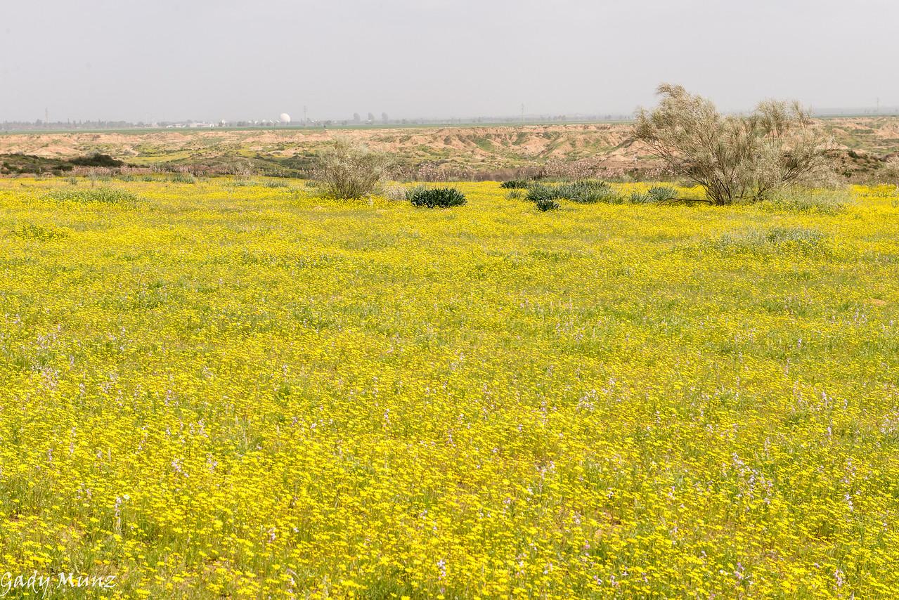 Habsor river, Negev North, Israel