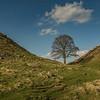 Hadrian's Wall - Sycamore Gap - Northumberland (April 2018)