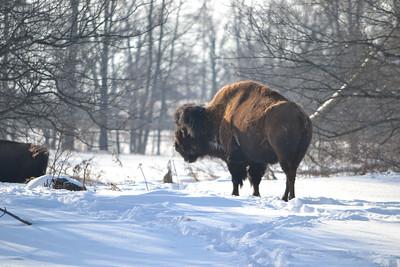 Halton Conservation Parks 2014