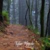 38  G Trail Fog