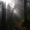 146  G Trail View V